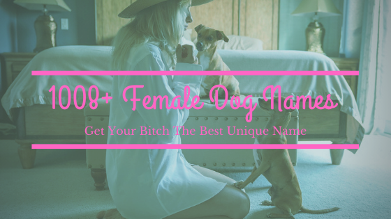 Get Thr Best Femal Dog Name For Your Bitch