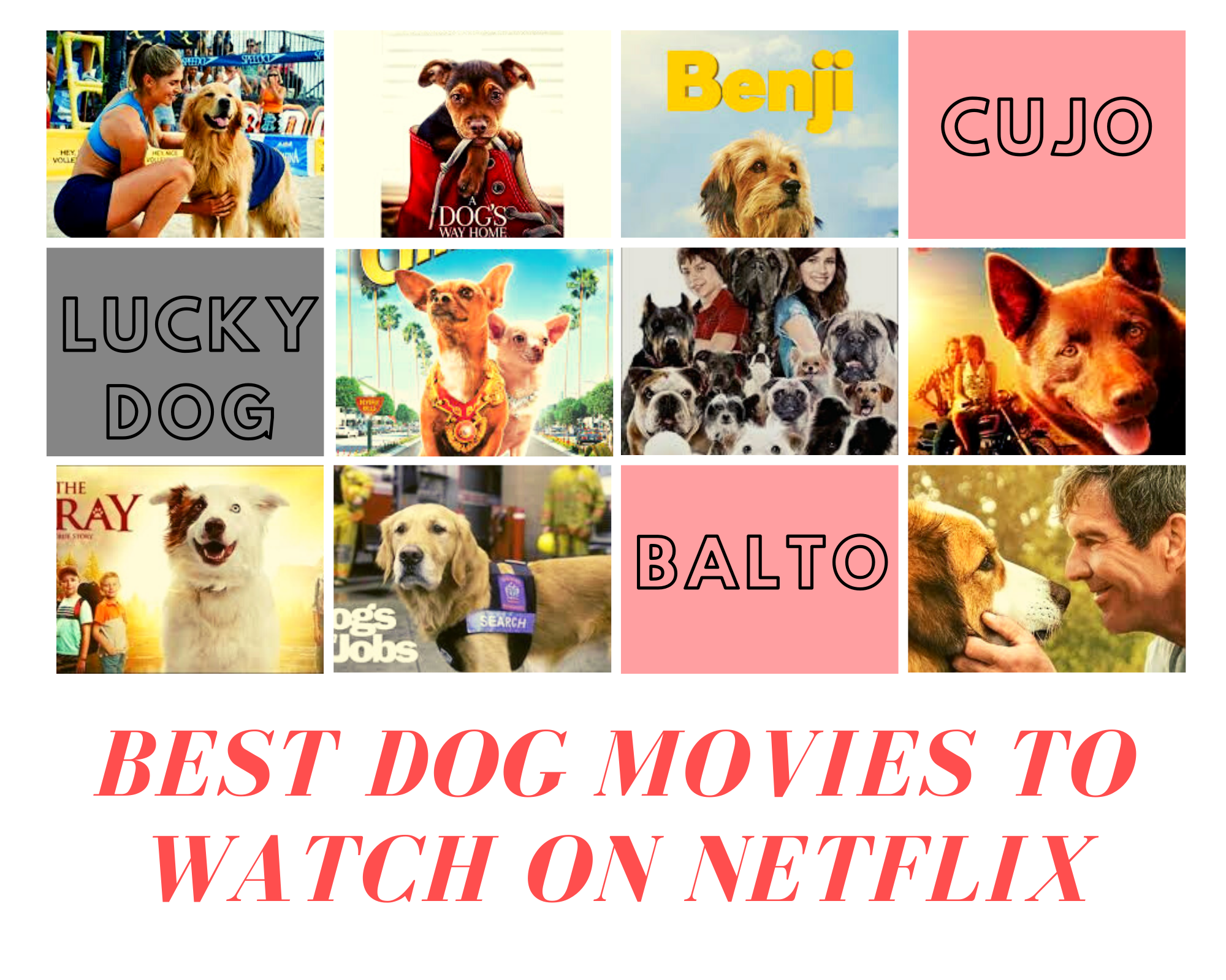 Dog Movies To Watch On Netflix, Amazon, Apple TV And Others